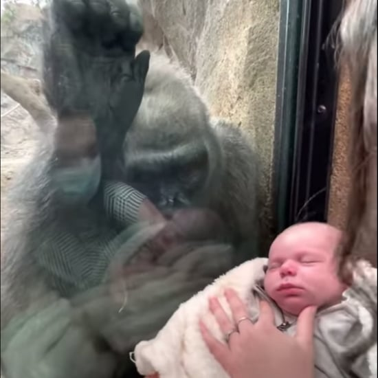 Gorilla Mom Bonds with Human Mom and Baby at Boston Zoo