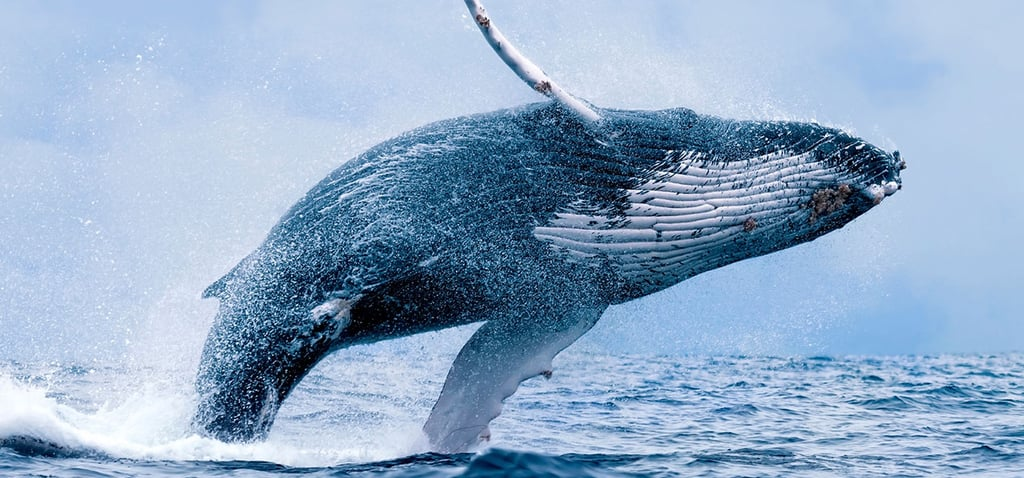 Best Whale Watching Gift Voucher Australia