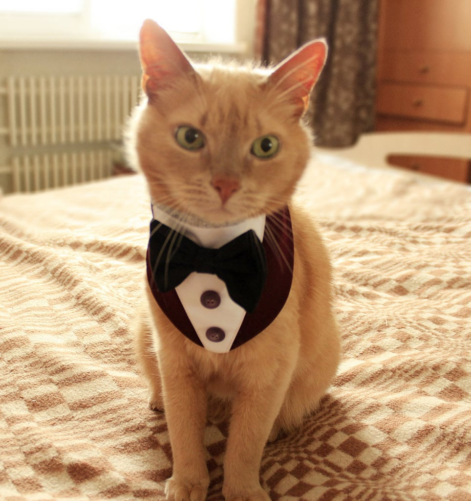 Cat Tuxedo Halloween Costumes