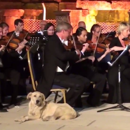 Dog Crashing Orchestra Concert
