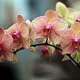 Give Orchids Instead of Roses