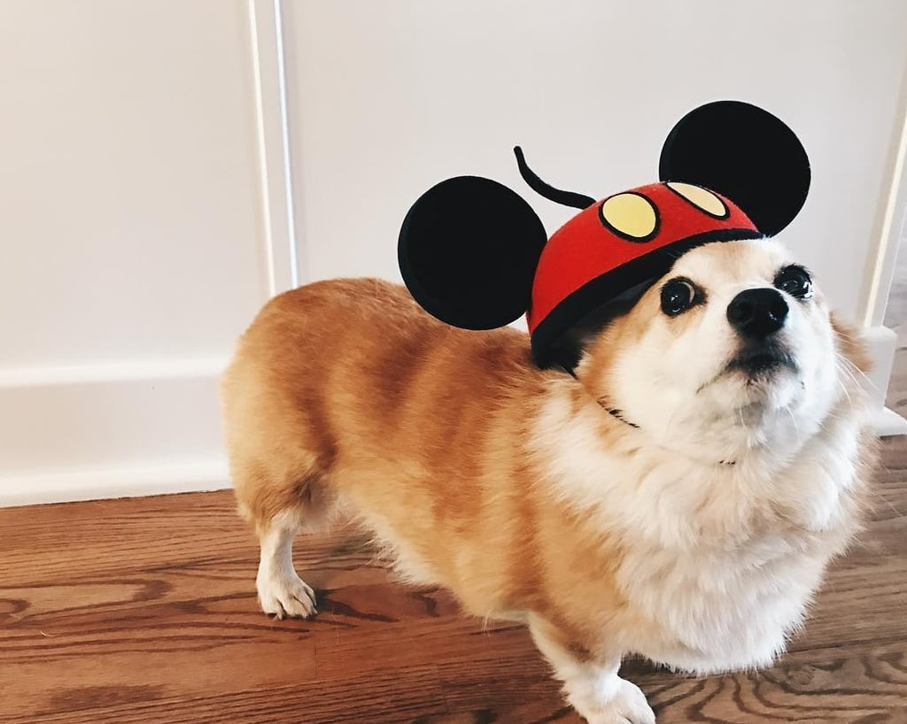 Dogs Wearing Mickey Mouse Ears