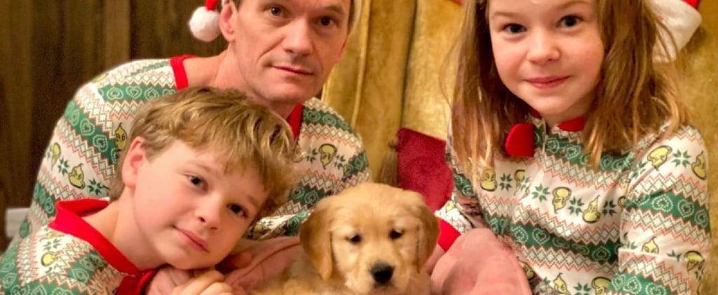 How Many Pets Do Neil Patrick Harris and David Burtka Have?