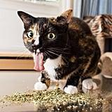 Cats on Catnip ($16)