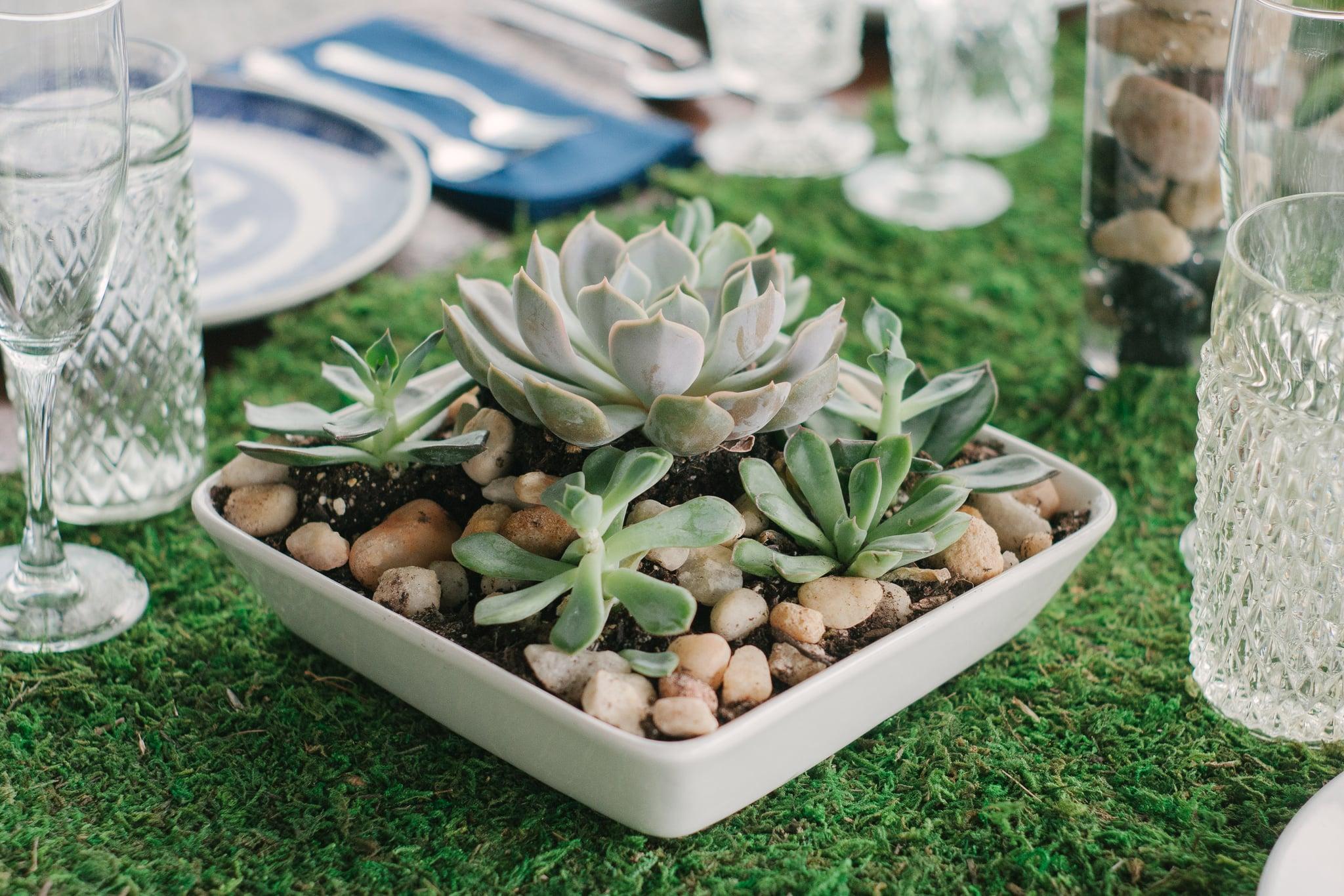Succulent Garden Centerpieces 61 Cactus Baby Shower Photos We Re
