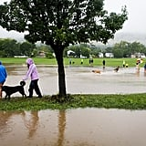 People took in the sight of a flooded park in Boulder, CO.