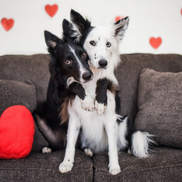 instagram dogs for valentine's day | popsugar pets, Ideas