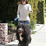Rachel Bilson Rides a Huge Dog During a Lunch Date
