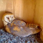 "Owlet Cam: Get on ""Egg Hatch Watch"" With Molly"