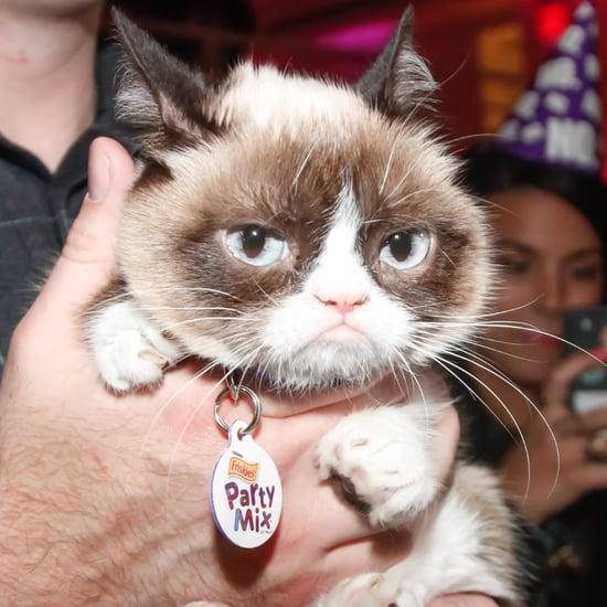 Grumpy Cat Meme Generator