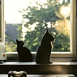 Even cat silhouettes are gorgeous.