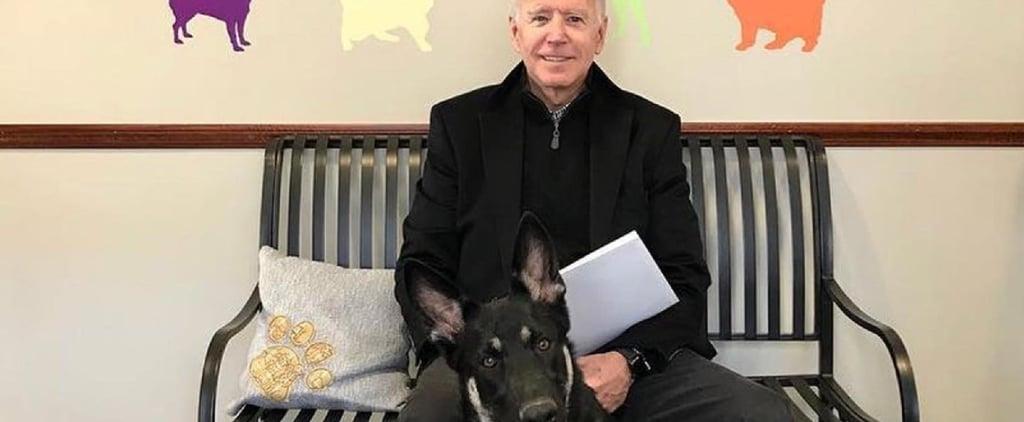 Joe Biden's Dog Major Is Getting an Indoguration Event