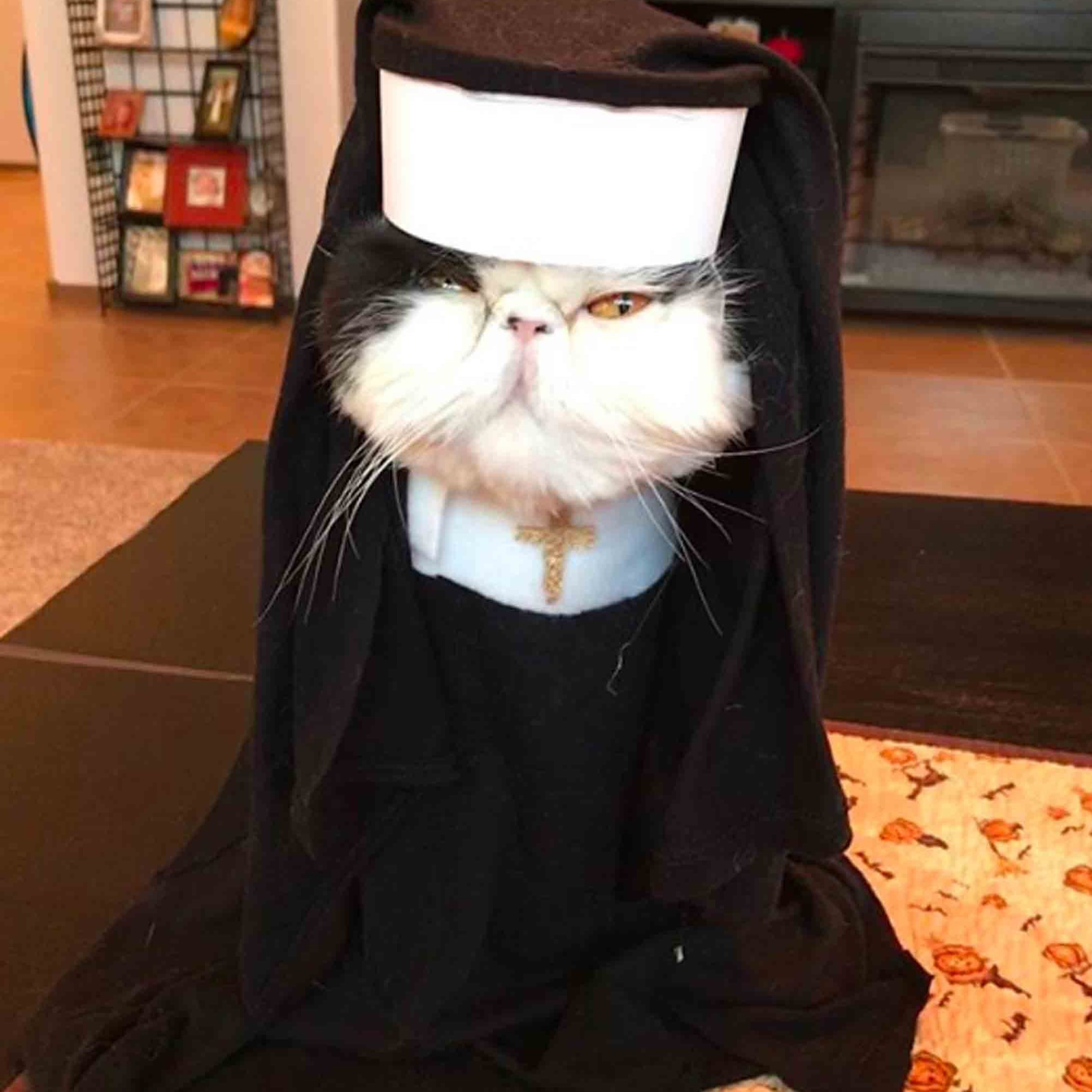 persian cats wearing halloween costumes | popsugar family