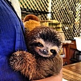 Hug a Sloth in Costa Rica