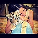 Cuddle a Baby Tiger