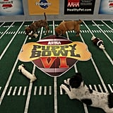 Pictures of Puppy Bowl VI 2010-02-04 18:54:20