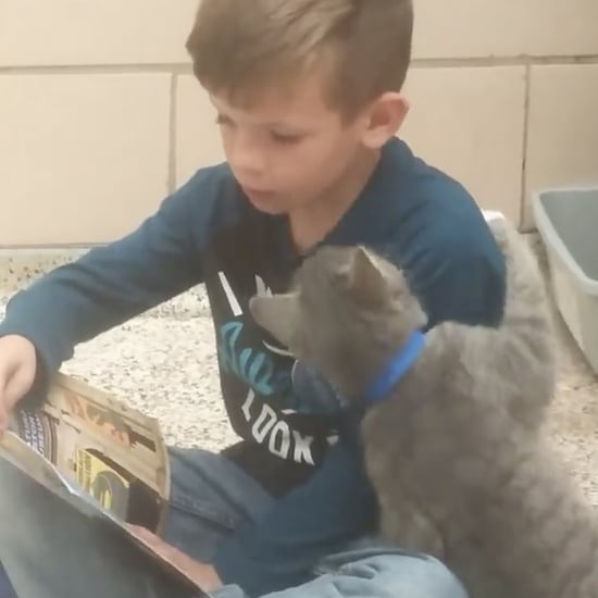 Little Boy Reading to Shelter Cat | Video