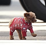 Blake Lively's dog Penny wore an outfit on the Gossip Girl set.