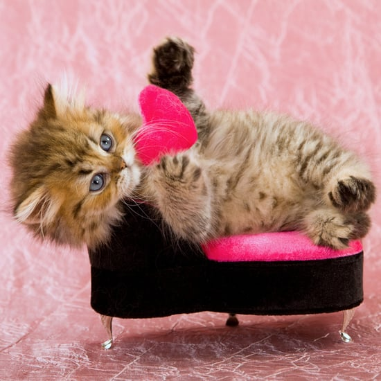 valentines day cards from the cat popsugar pets - Cat Valentines Day