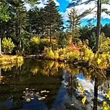Marvel at the peace and quiet of the Coastal Maine Botanical Gardens.