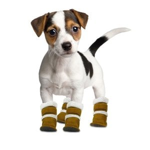 Puppy Boots