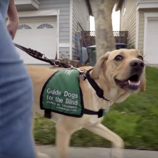 Disney+ Series About Guide Dogs in Training