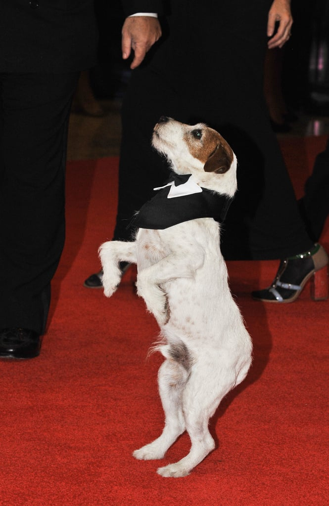 There was no shortage of cute pet tricks when Uggie was around!