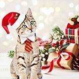 Santa Hat Christmas Outfit