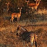 Mapungubwe, Botswana