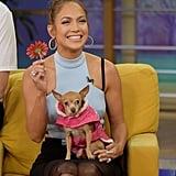 Jennifer Lopez went to promote The Boy Next Door at Miami's Despierta America on Tuesday.