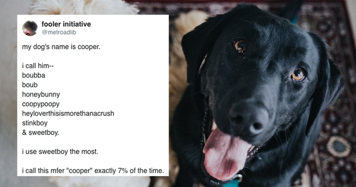 LOL, Pet Owners Shared All the Ridiculous Nicknames They Give Their Pets