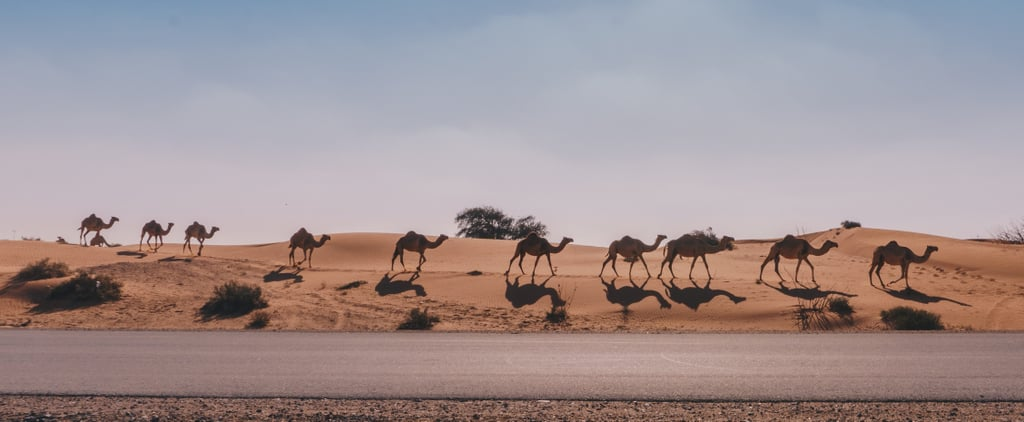 A State-of-the-Art Camel Hospital Just Opened and Of Course It's in the UAE