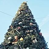So Many Christmas Trees
