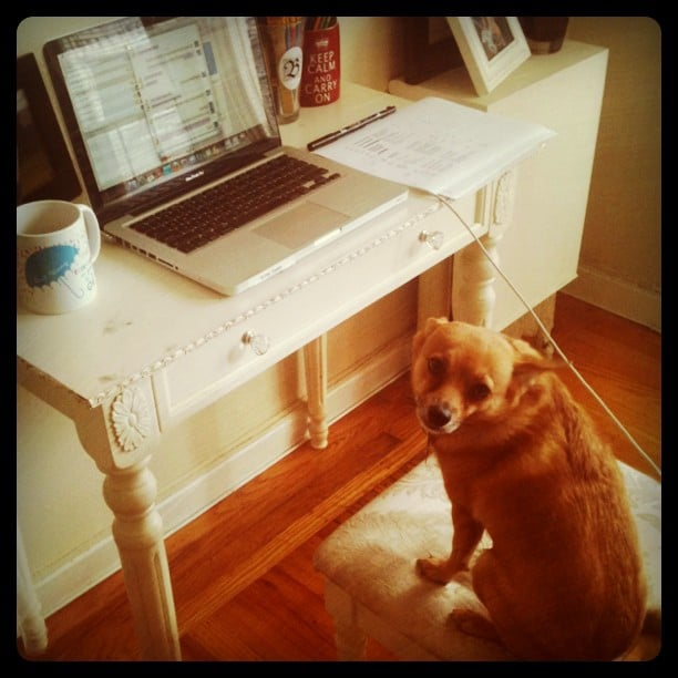 FabSugar's Brittney Stephens's Chihuahua-Terrier mix is named Carrie Bradshaw, and she must be working on a column.