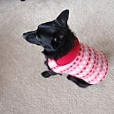 Happy Valentine's Day Fleece Dog Coat