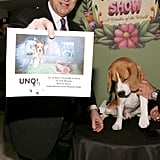 Número Uno at Macy's Flower Show