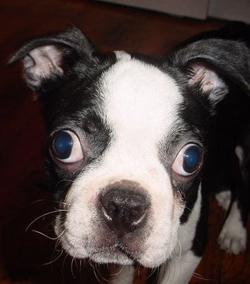 Ask PetSugar: Why Do My Pet's Eyes Look Awful in Photos?