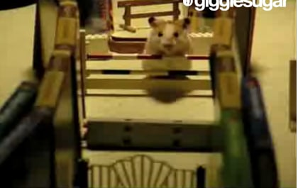 Hamster Jumps Hurdles