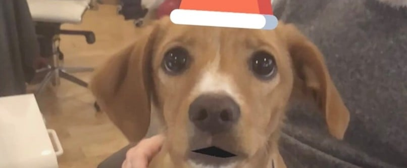 Animated Holiday Cards of Dog