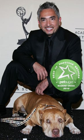 Cesar Millan's Pit Bull Daddy Died