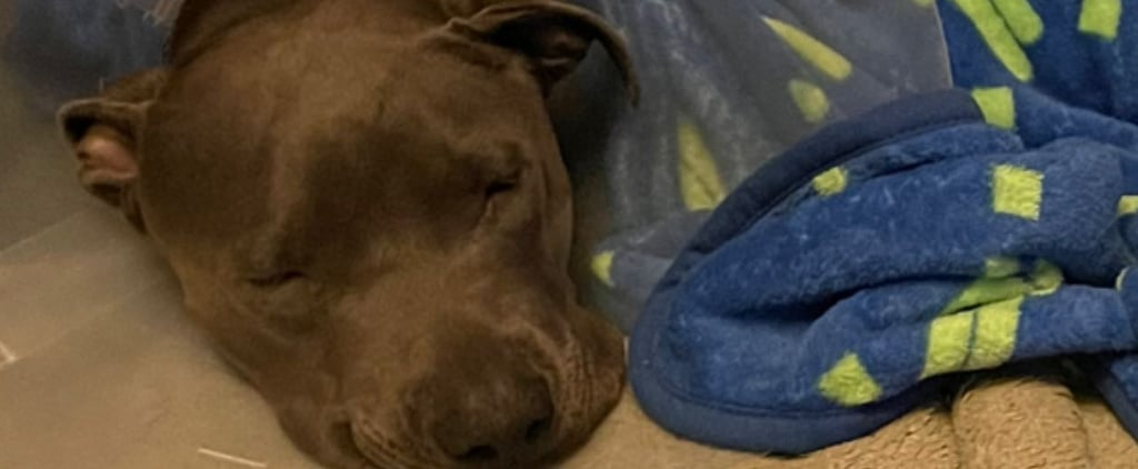 Billie Eilish's Dog Shark Got Surgery After Swallowing a Toy