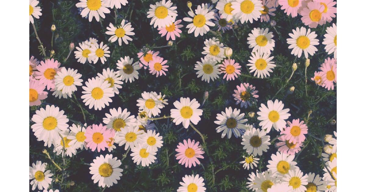 Vintage daisy may 1 n15 - 2 part 8