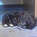 Stinky Puppy!