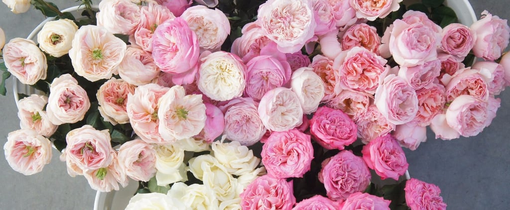 5 Peony Doppelgangers That Might Just Be Better Than the Real Thing