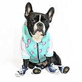Frenchie Dog Hoodie — Pop Skull