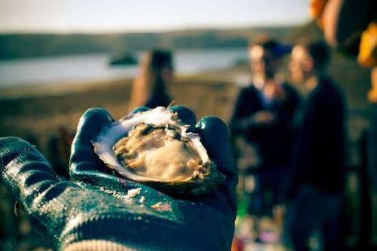Do You Know How to Shuck Oysters?