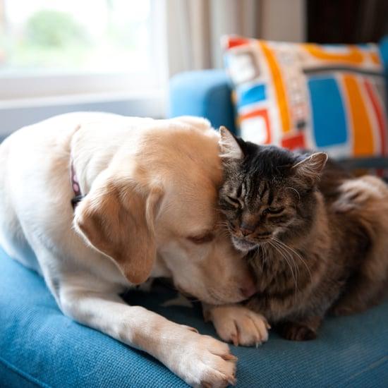 Is Pet Insurance Worth It?