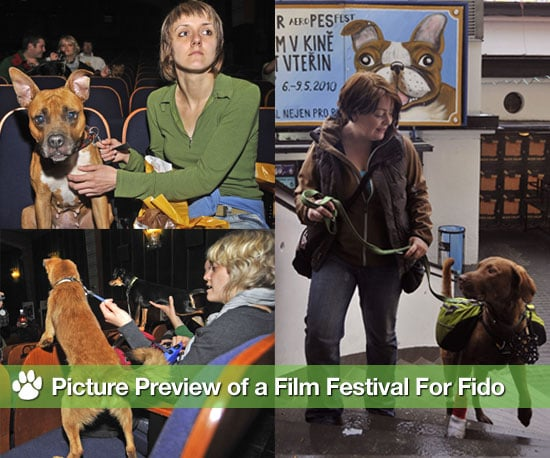 Pictures of Film Festival For Dogs