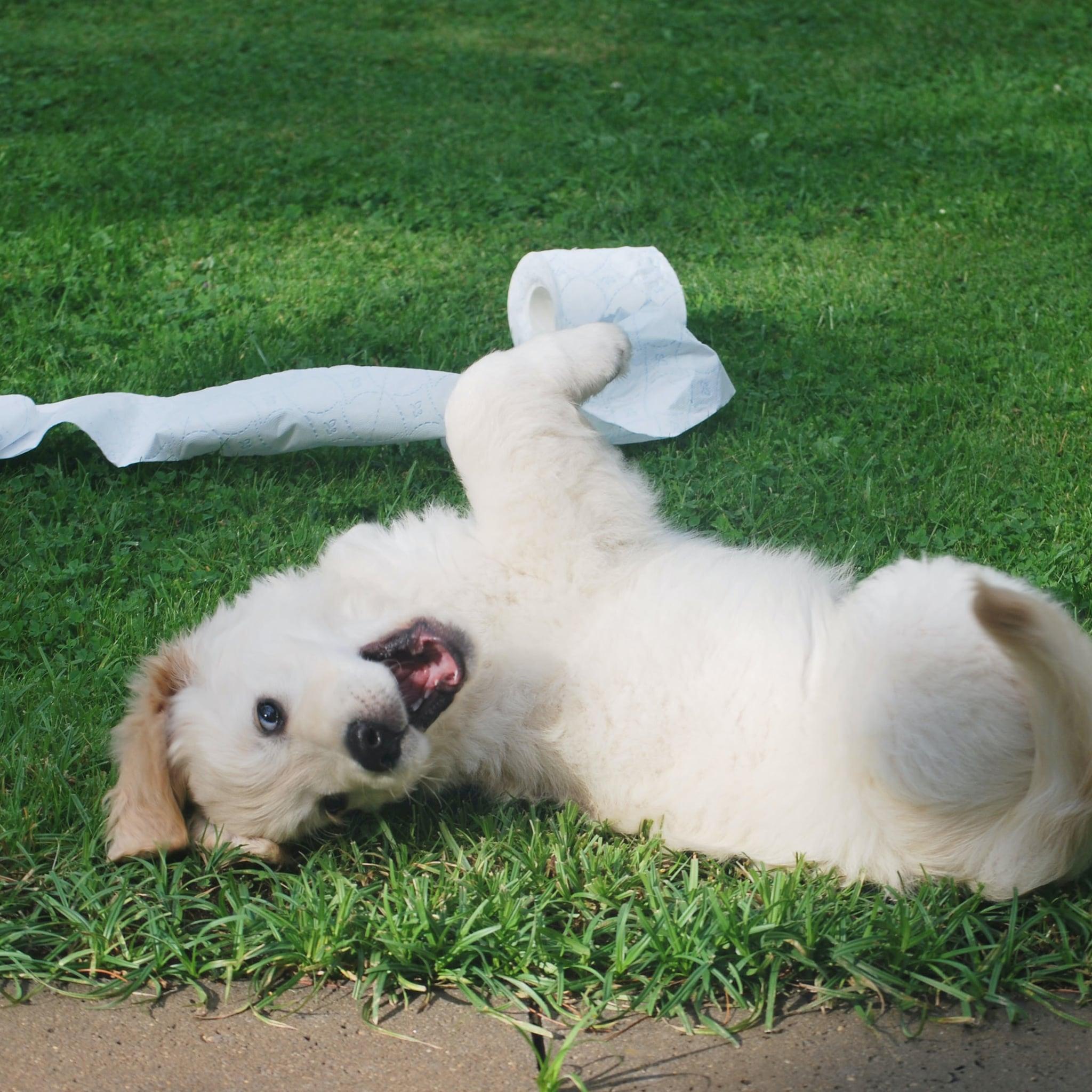 Funny Puppy Videos On Tiktok Popsugar Uk Pets