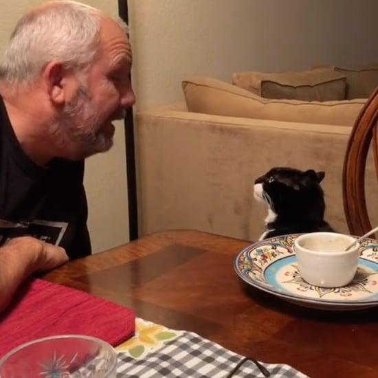 TikTok Videos of Spoiled Cat Eating at Dinner Table With Dad